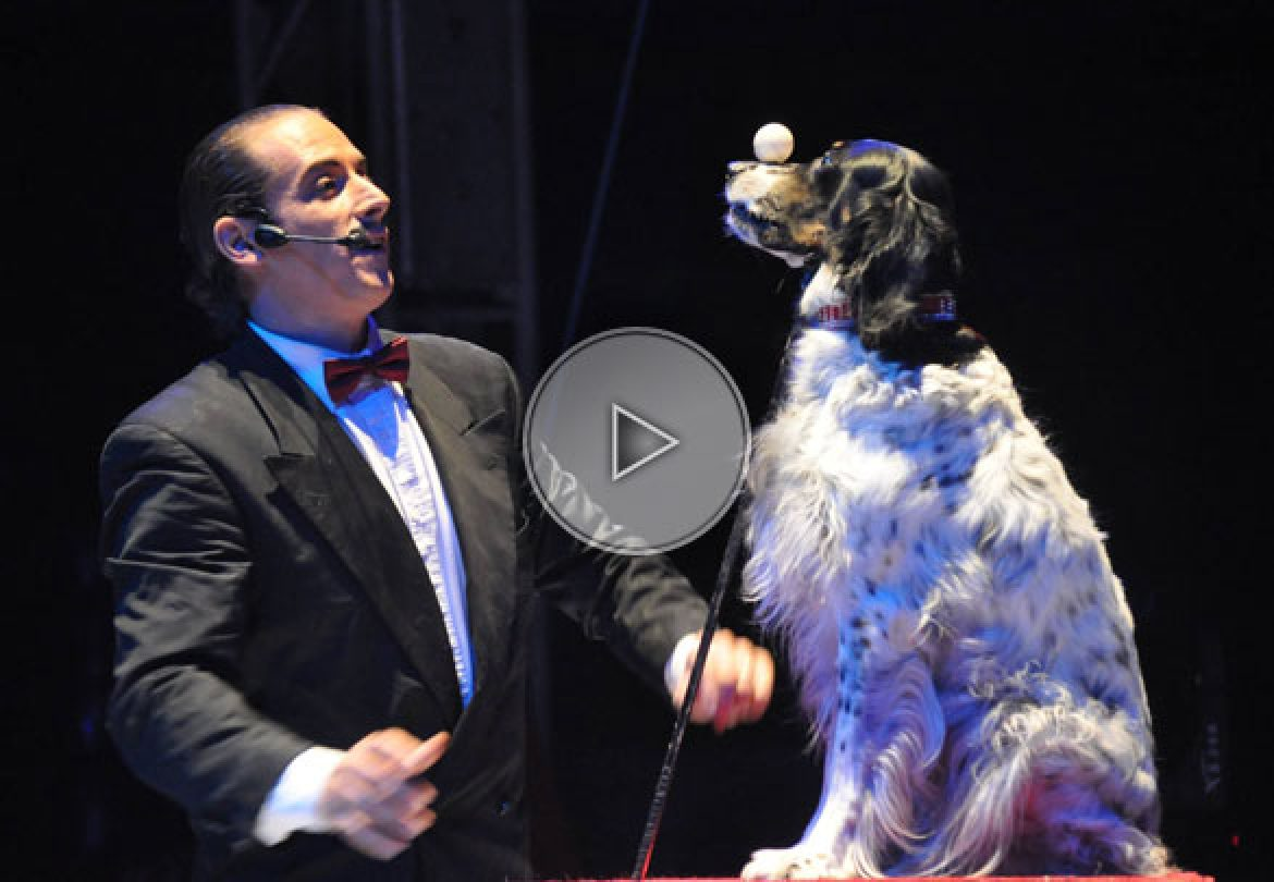 lazy dog, phenomenal dog, dog act, hand balance dog, dog show, exceptional dog