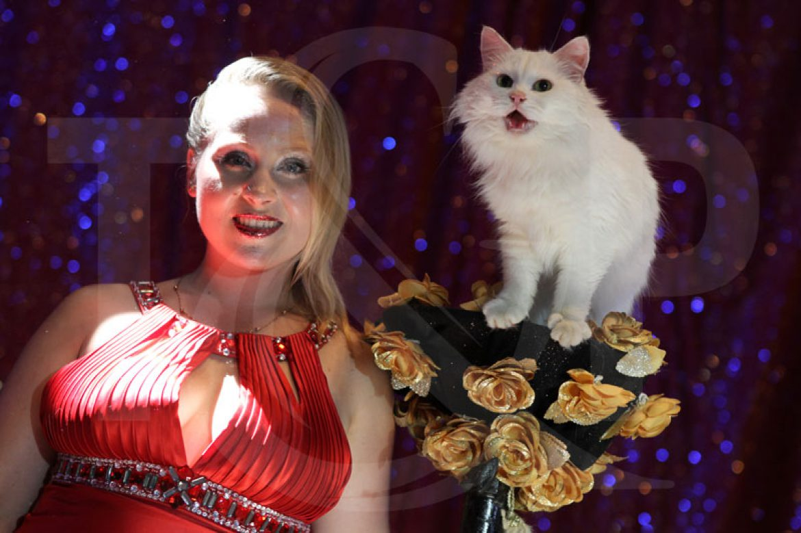 cats act, switzerland, fribourg, animal show, animal lover, trained cats, circus act, circus artist
