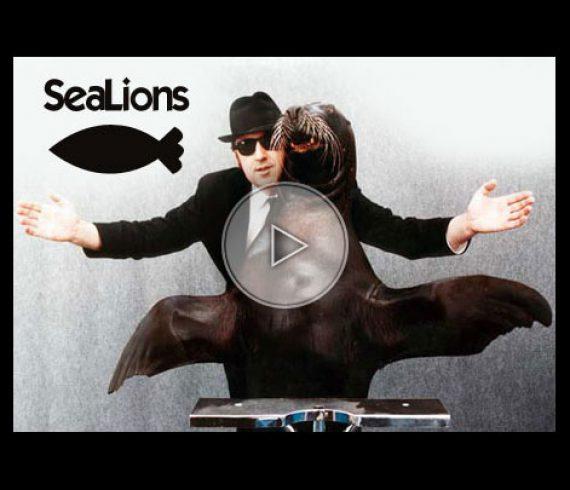 sealion act, sealions, numéro d'otarie, otaries