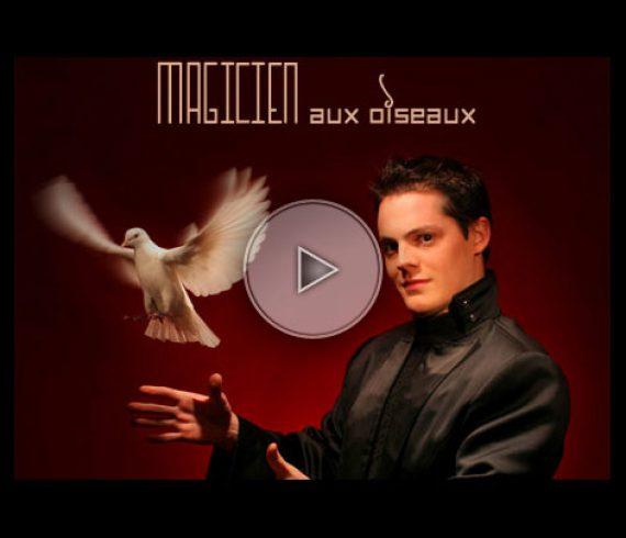 magicien aux oiseaux, bird magicians, colombes