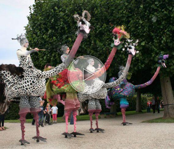 stilts ostrich, stilt ostrich, walkabout ostriches, ostriches, walkabout ostrich